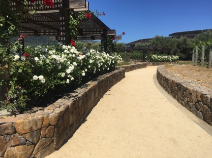 mondavi rose garden
